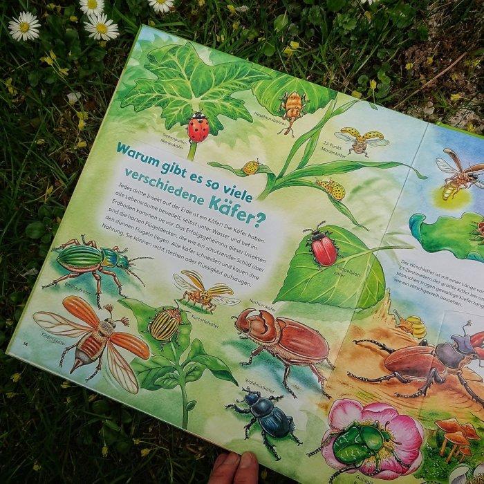 Doppelseite über Käfer aus dem Buch WAS IST WAS Junior Insekten,